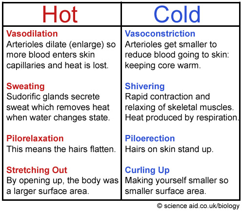 What Temperature Can A Human Warm A Room Up To